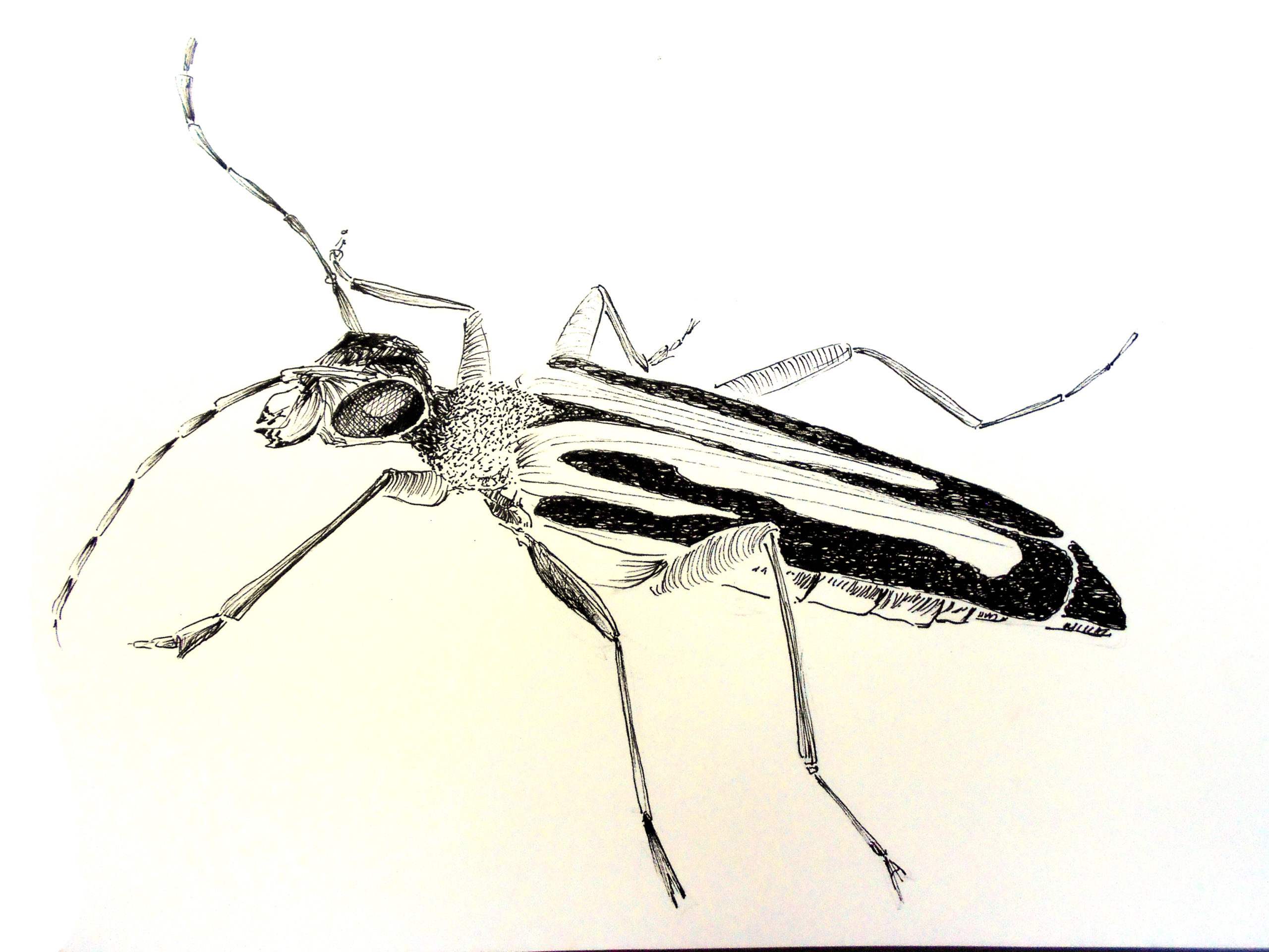 insecte (1)