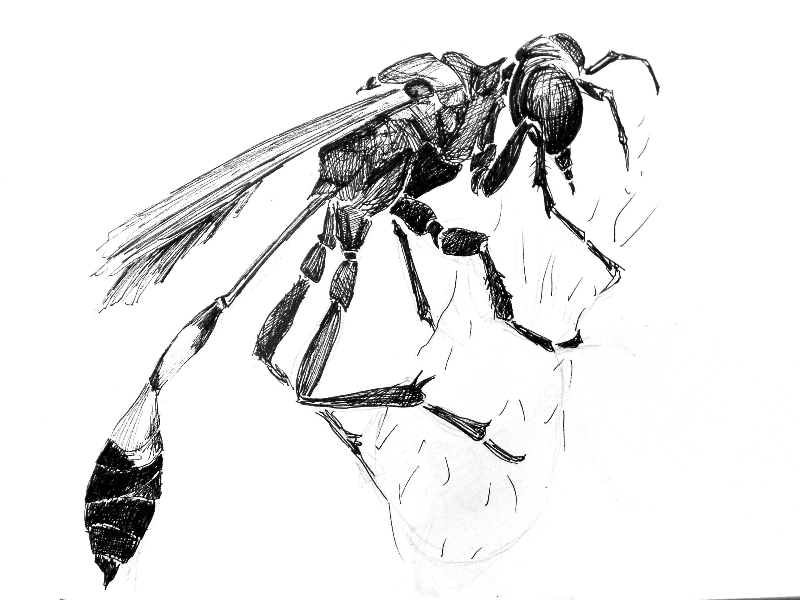 insecte (2)