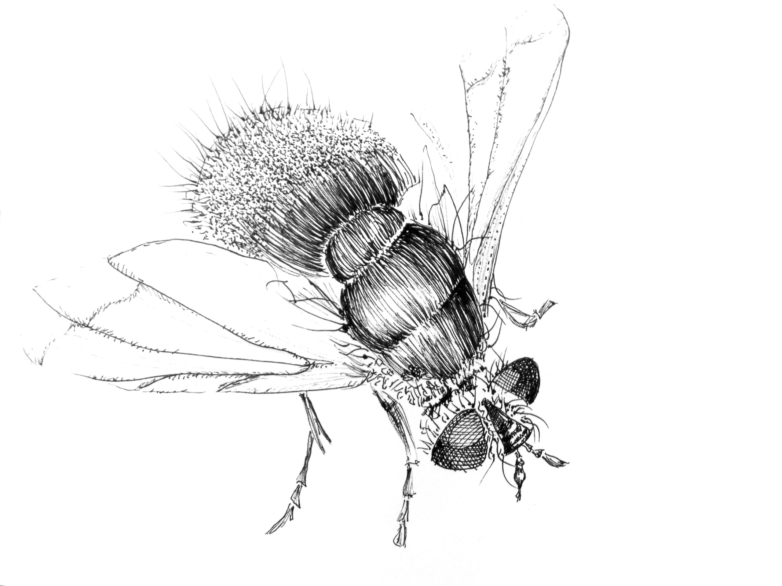 insecte (4)