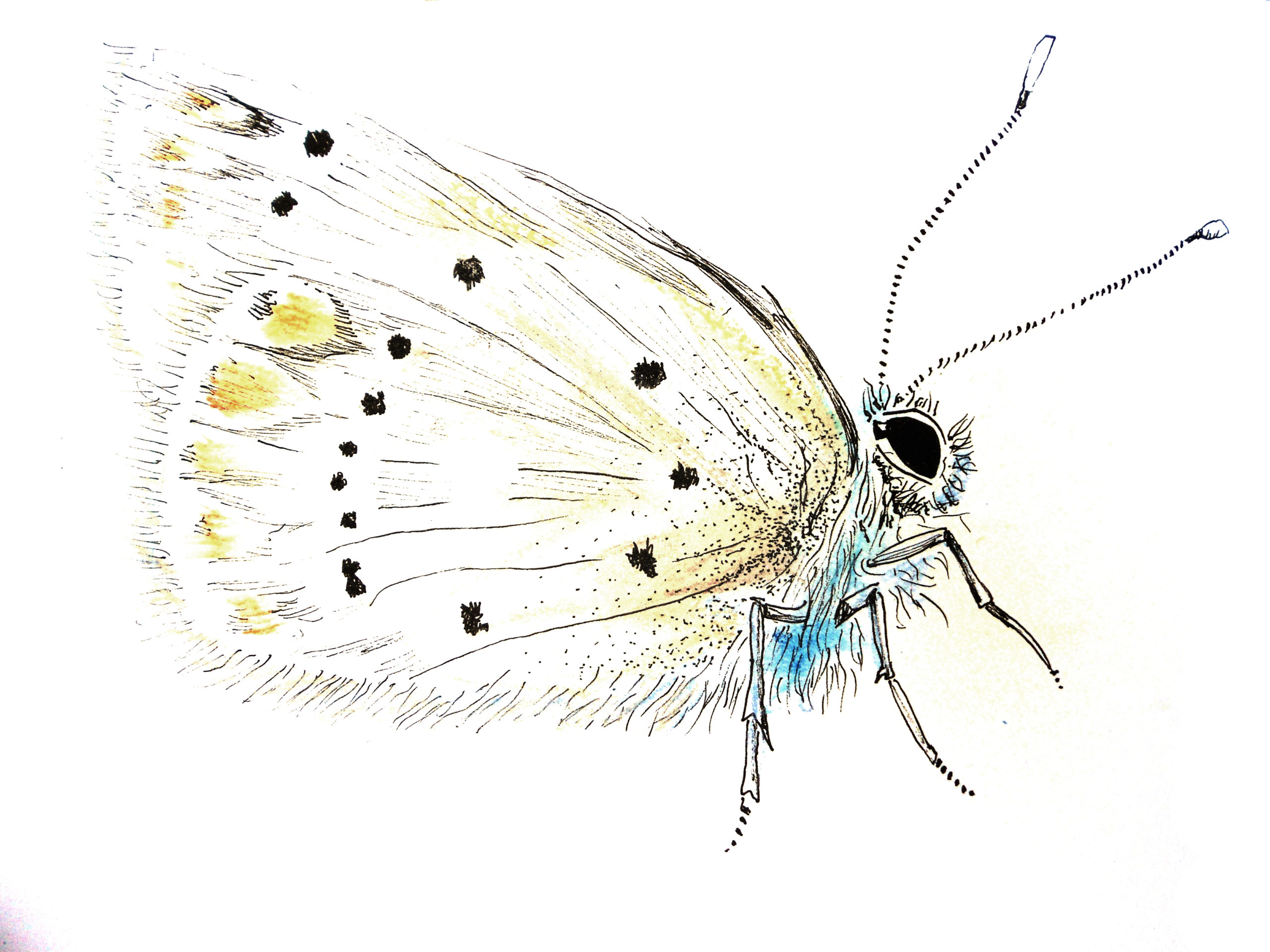 insecte (5)
